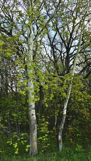 Красоты России First Eyeem Photo Wood At Forest Wood