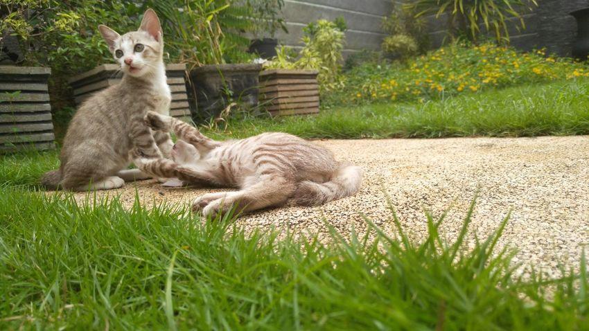 Original photo And_adachii Animal Pet Animal Themes Animal Photography Animal Love Animalphotography Cat Of Eeyem Catsofinstagram Catoftheday Catlovers Cats 🐱 Cat Eyes