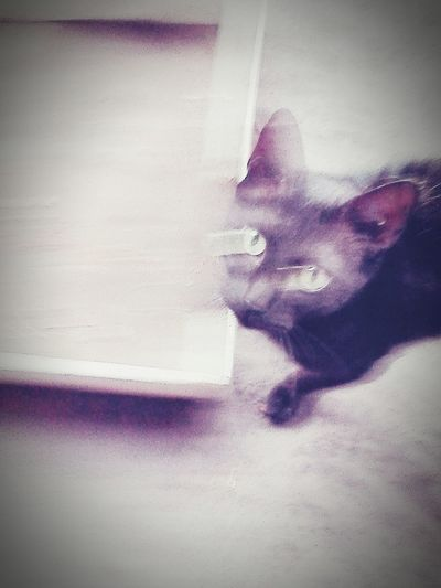 Cats 🐱 Taking Photos Notbad 😂😂