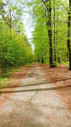 Forest Leaves Spring Green Poland Kluczbork Trees Path Orange