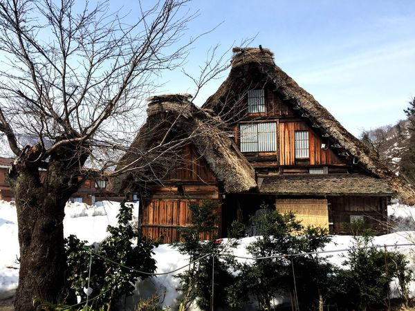 Architecture Building Exterior Built Structure Low Angle View Tree Sky No People Outdoors Day House Bare Tree Nature Nagoya Sirakawagou Travel Traveling Japan