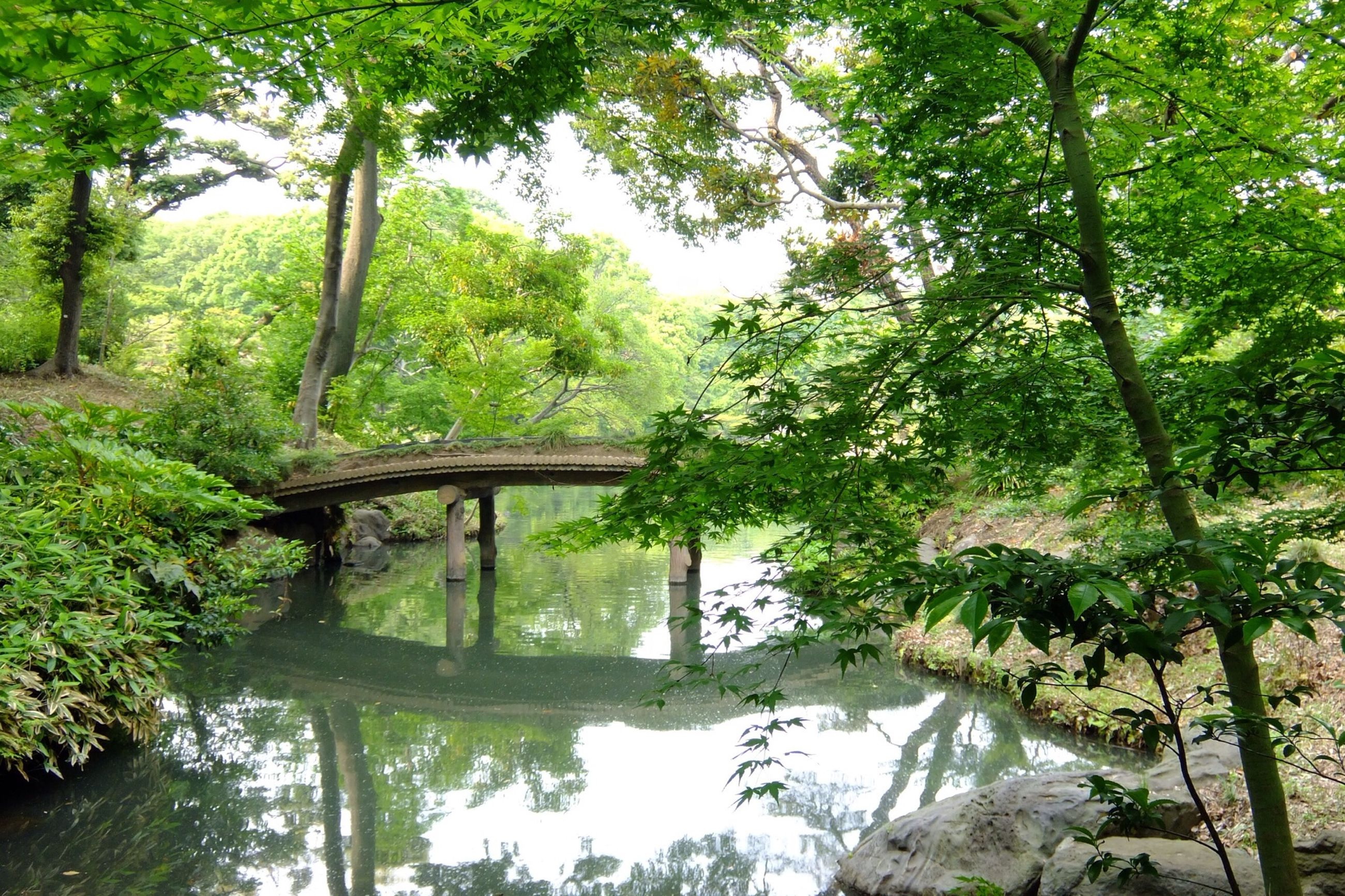 tree, water, tranquility, reflection, tranquil scene, beauty in nature, growth, green color, lake, nature, scenics, river, branch, forest, bridge - man made structure, lush foliage, idyllic, pond, stream, footbridge