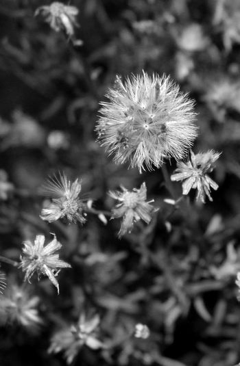 Beauty In Nature Black And White Photography Close-up Desert Flower Devil's Punchbowl Flower Growth Nature Plant Selective Focus The Devil's Punchbowl Pearblossom, Ca Natures Diversities
