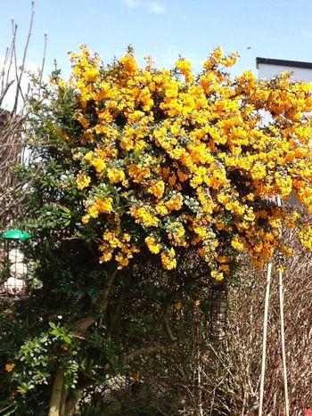 Berberris Plant Love