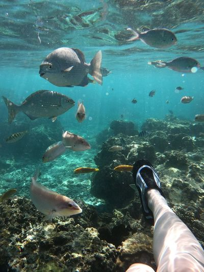 View of fishes swimming in sea