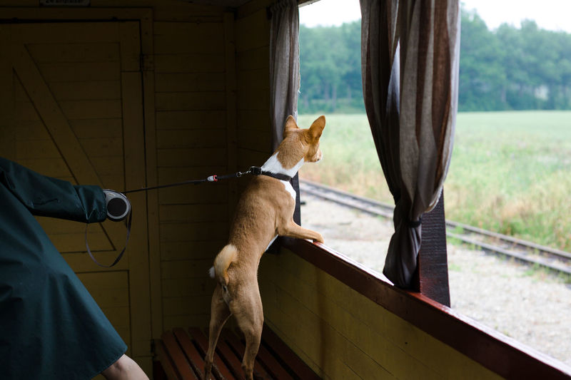 Pet Owner Collar Domestic Animals One Animal Dog Canine Looking Train Steam Train Stay COME ON  Sky Stubborn Stubbornness Pet Attention Curiosity Window Pull Pulling Leash Pets Curious Alert Funny