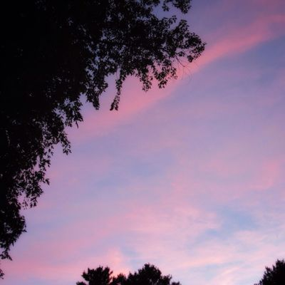 Sunset this evening 🤗 Tree Sky Cloud - Sky Beauty In Nature Silhouette Pink Color Low Angle View Scenics - Nature Tranquil Scene Idyllic Dusk