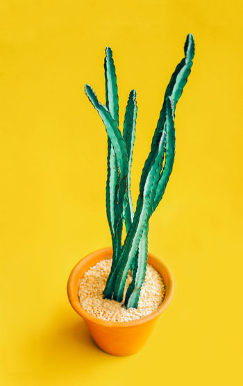 Close-up of potted plant against yellow background