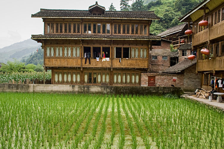 Traditional Wooden houses Village of Red Yao tribe. Longsheng Huangluo Yao Village. Guilin, Guangxi, China Rice Paddy Village Longji Rice Terrace Red Yao Terraced Field China Terraces Guangxi Field Longsheng Nature Green Travel Travel Destinations Landscape Tourism Tourism Destination Guilin Agriculture Scenics Farm Mountain Villages Environmental Conservation Vacations