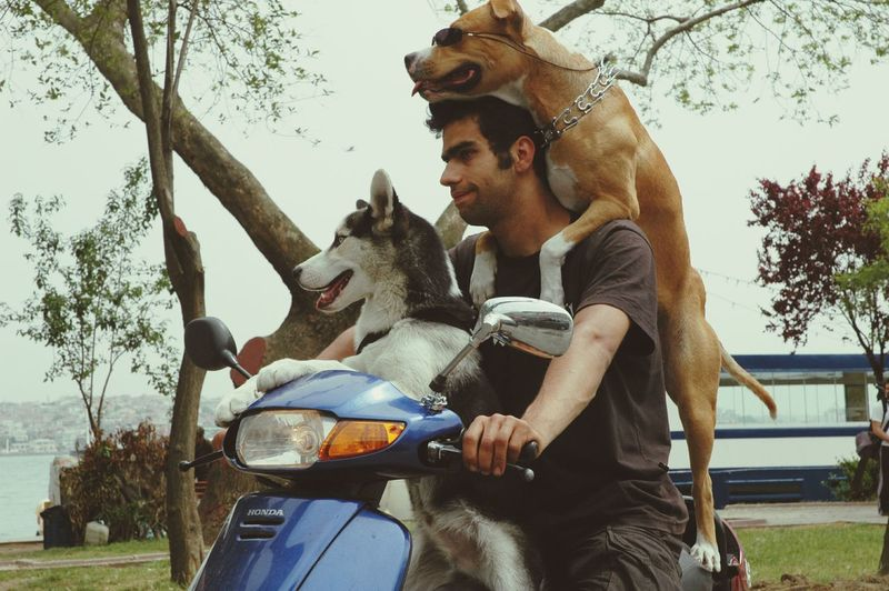 dog scooter Scooter Riding  Dogs Dogs Transportation Two People Togetherness Sitting Tree Mid Adult Men Bonding Beard Domestic Animals