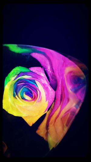 Rainbow- rose Flower Mijerra Karaoke Stockholm, Sweden