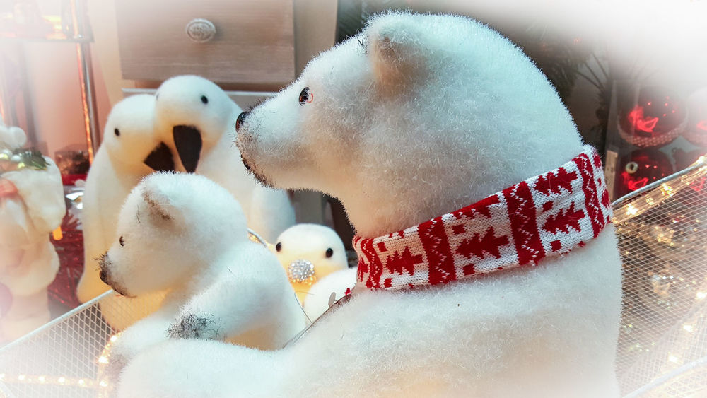 Scene White Color Christmas Decoration Christmastime Teddy Bear Teddy Polar Bear Human Representation No People Indoors  Close-up Day Indoors  Toy Christmas Stuffed Toy Animal Themes Celebration Domestic Animals Pets Mammal Bird