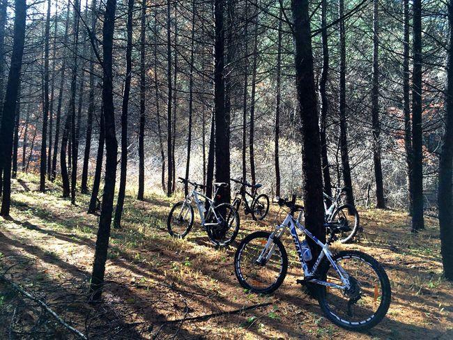 MTB Riding Gangwondo Korea Enjoying Life Landscape IPhone 5S Mountain Biking