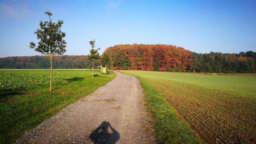 Dirt road amidst trees against sky during autumn