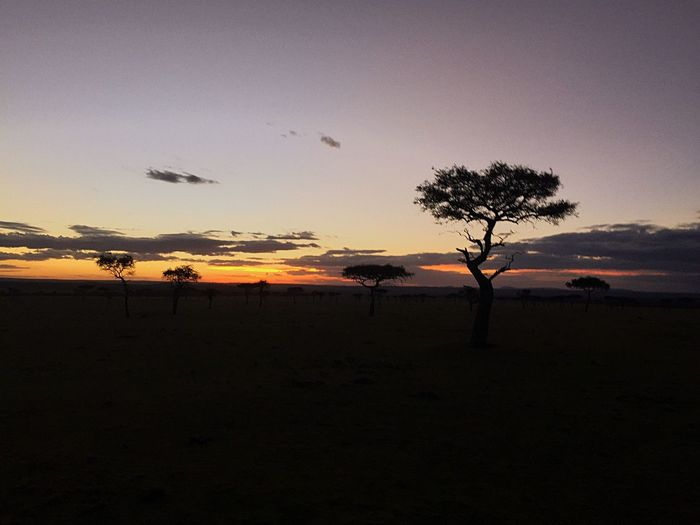 EyeEmNewHere Sunset Nature Beauty In Nature Landscape Tree Sky Outdoors Animals In The Wild Africa Cloud - Sky Travel Dramatic Sky The Traveler - 2018 EyeEm Awards