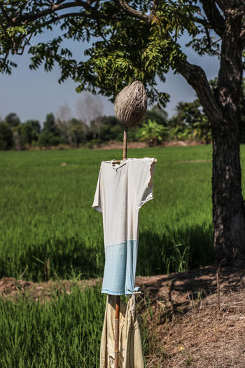 my home Day Scarecrow Hanging Clothing Green Color Landscape Focus On Foreground Nature Tree Plant Field One Person Casual Clothing Textile Farm Rural Scene Land Wooden Post Grass Growth Agriculture Jeans