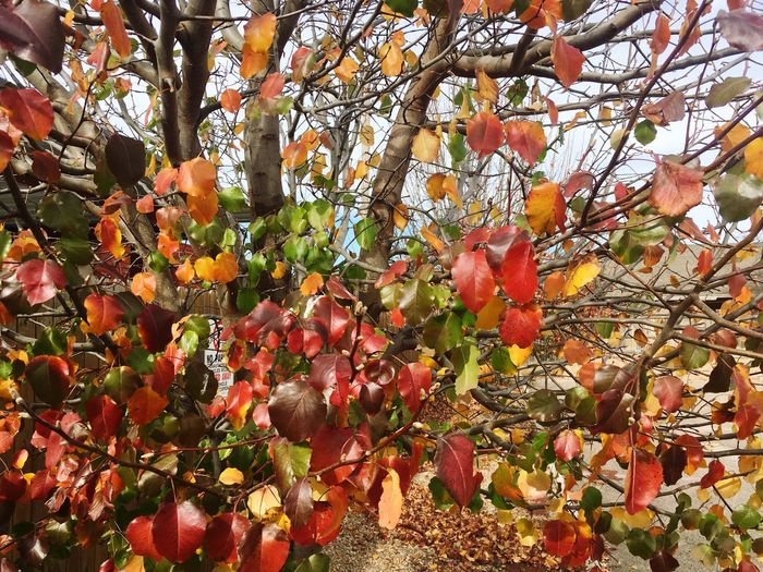 EyEmNewHere Tree Growth Fruit Branch Nature Orange Color Beauty In Nature Outdoors Leaf Day No People Freshness Flower Orange Tree Low Angle View Autumn Close-up Sky