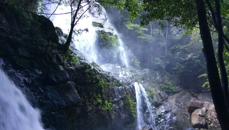 Waterfall Tree Water Nature Beauty In Nature Forest Outdoors No People Freshness Stones & Water Morning Lights