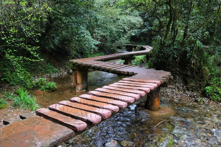Footbridge over stream amidst trees in forest