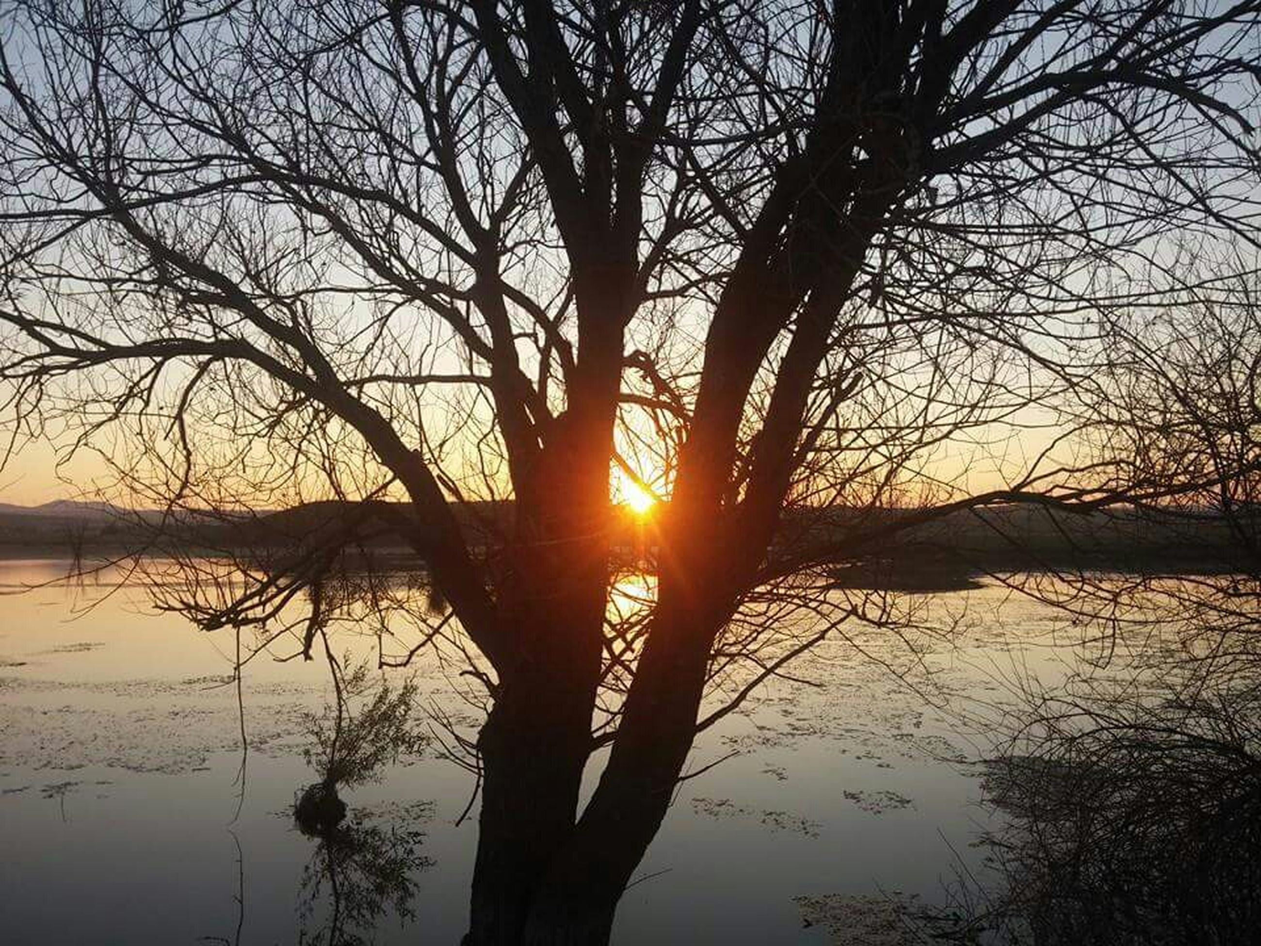 sunset, sun, tranquil scene, silhouette, tranquility, scenics, water, beauty in nature, reflection, tree, nature, lake, sky, sunlight, idyllic, bare tree, orange color, branch, back lit, tree trunk