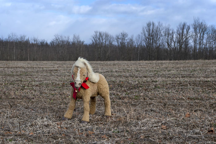 Animal Themes Christmas Country Domestic Animals Field Holiday Horse Laughing Pony Red Bow Stuffed Animal Stuffed Horse Toy