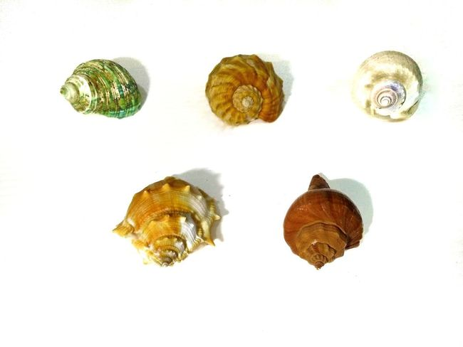 Shells Seashell Sea Shell Group Set Collection White Backround Coast Ocean Beach Sea Shells And Rocks Rocks And Shells Shells🐚 Seaside Stone Sea White Background Textured