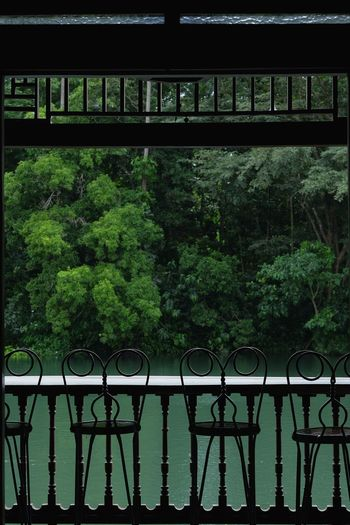 River Fence Connection Railing Growth Tranquility Tranquil Scene Water Scenics Outdoors Green Color Riverbank Non-urban Scene Beauty In Nature Formal Garden Province Life Villa Escudero The Way Forward Solitude Relaxing Reminiscing Finding New Frontiers The Architect - 2017 EyeEm Awards