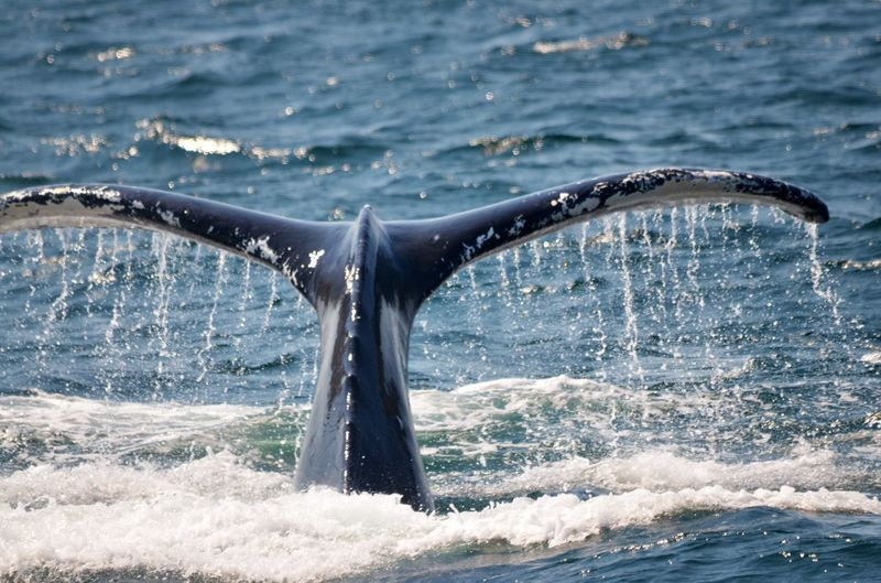 Whale swimming at sea