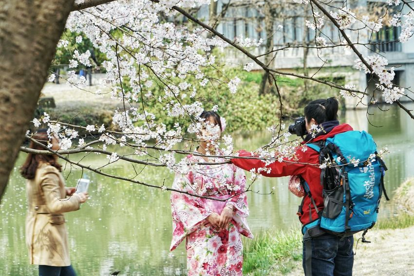 China Photos Japanese Beauty Flower Model Girl Japanese Girl Model Shoot Flowerpark Model And Photographer Taking Photos Happening In The Park Taking Photos Of People Taking Photos Cherry Blossoms People Watching Urban Spring Fever Streamzoofamily The Street Photographer - 2016 EyeEm Awards