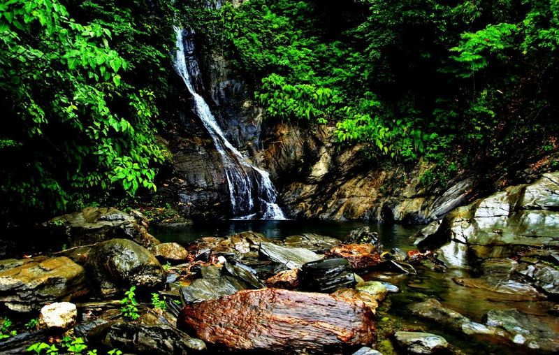 Papali Falls, Occidental Mindoro, Philippines Green Plants Rock Beauty In Nature Beauty In Nature Day Downloading Falls Flowing Water Forest Land Motion Nature No People Plant Rock Rock - Object Scenics - Nature Solid Texture Tranquility Tree Water Waterfall Whie