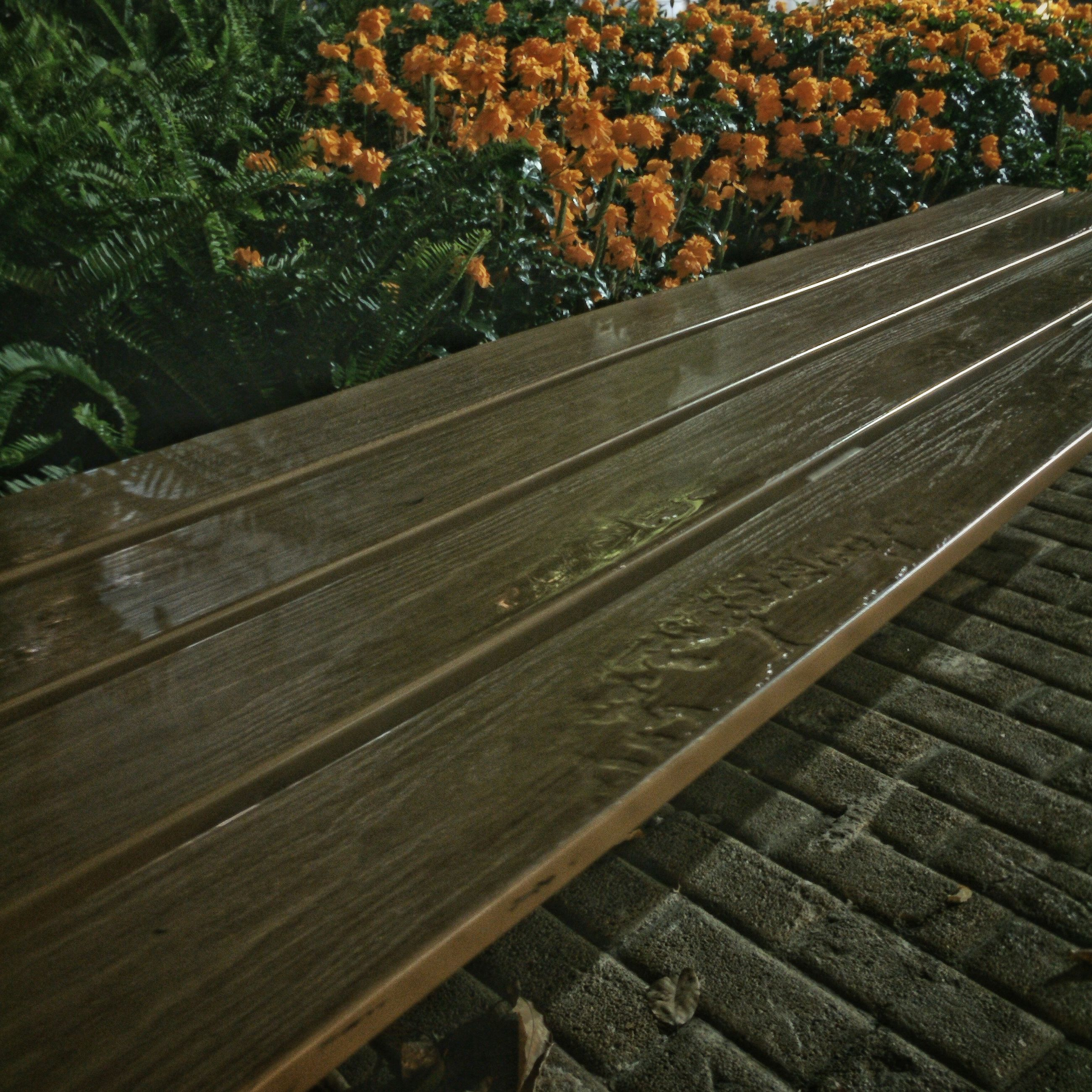 railroad track, the way forward, tree, high angle view, rail transportation, transportation, nature, growth, vanishing point, diminishing perspective, leaf, forest, no people, outdoors, wood - material, day, tranquility, plant, sunlight, railway track