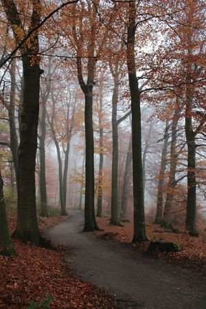 Forest Trees EyeEm Best Shots Foggy Mysterious Trail Fog_collection What The Fog Fall Beauty