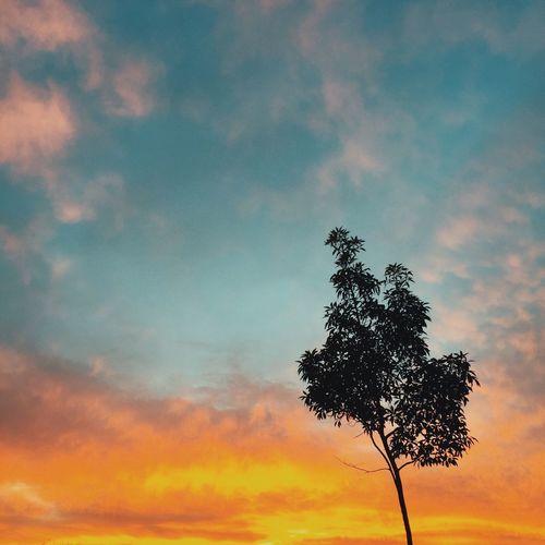 Sunset Iphonagraphy Dog Walking Caught Thesunset