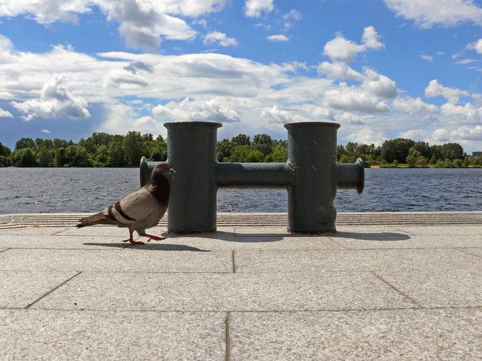 Pigeon by metallic bollard on promenade against sky
