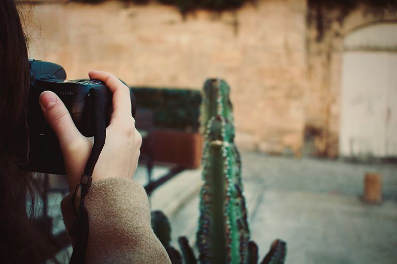 Beginnerphotographer Nikon Nikonphotography NikonD3400 Daytime Photography Green Plant Aix-en-Provence Photoofaphoto Friendphotoshooting Photography Cactus Plant Hand Focus On Foreground Real People Holding Human Body Part One Person