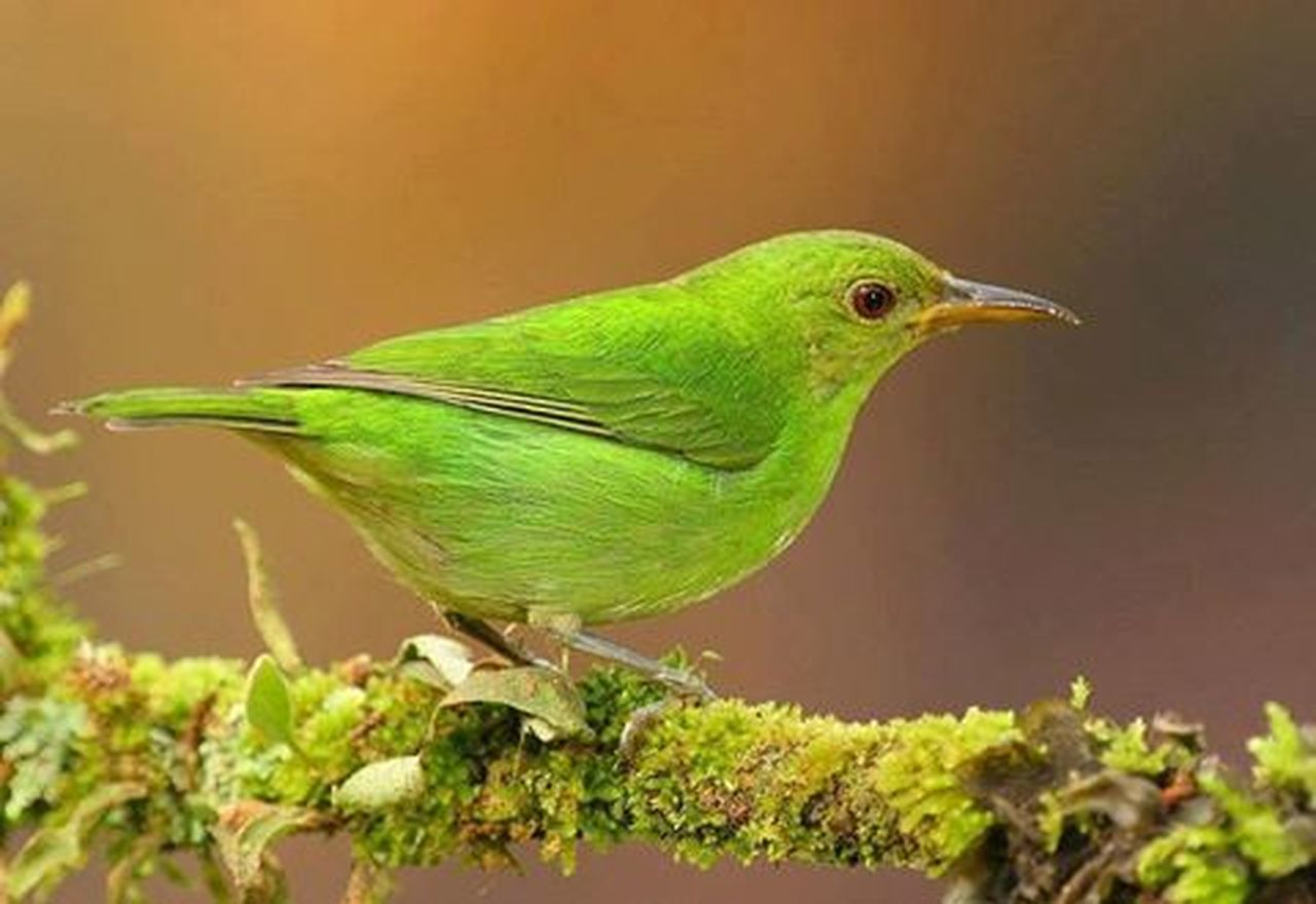 one animal, animal wildlife, animals in the wild, bird, green color, animal themes, nature, perching, no people, beauty in nature, outdoors, close-up, day