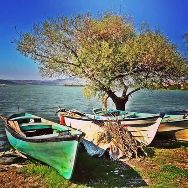 Nautical Vessel Water Transportation Nature Moored Sea Tree No People Mode Of Transport Day Beach Tranquility Outdoors Beauty In Nature Branch Sky Sunken