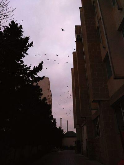 #azerbaijan #Baku Ganjlik Unec Flying Bird Flock Of Birds Silhouette No People Architecture Outdoors