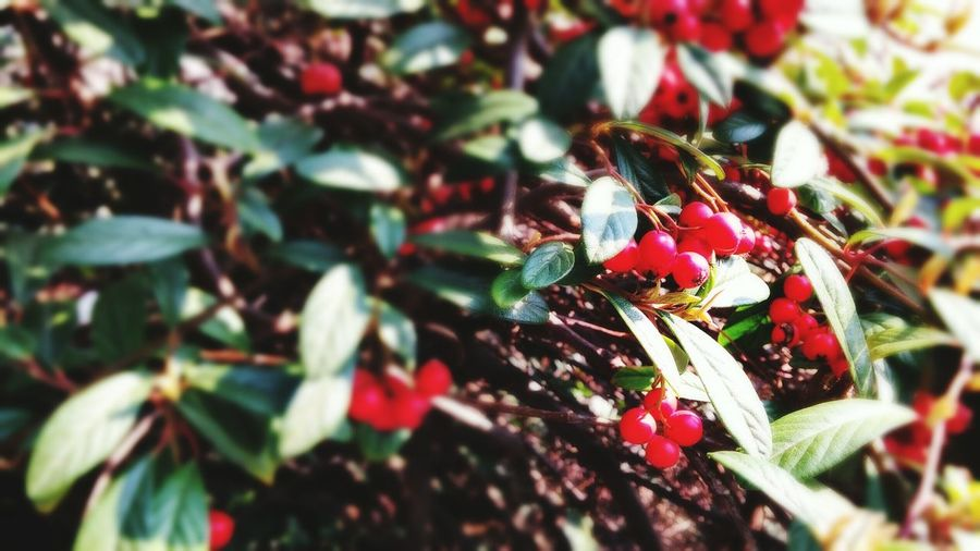 Red and blurred... Green Leaves Spring Flowers Croatiafullofnature Colour Of Life