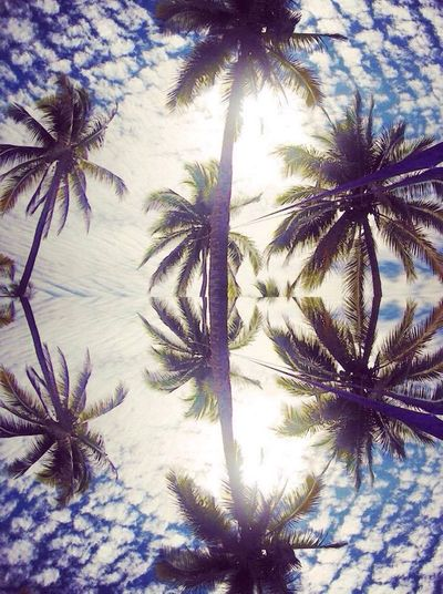 Mexique Holiday Nature Palmiers 🌴👣 Colourful