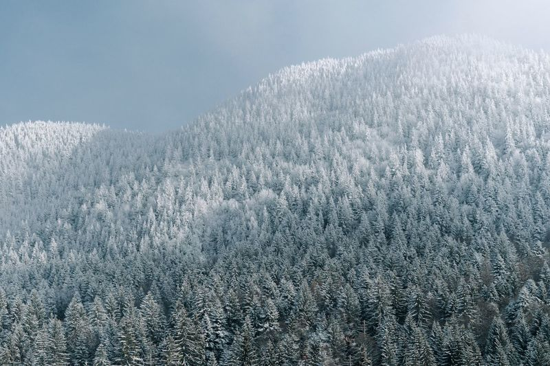 Winter Landscape Mountain Forest Snow Cold Temperature Backgrounds Pattern Sky Frozen Cold Snow Covered
