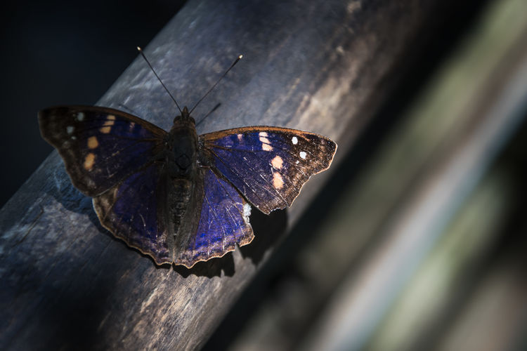 Space-Dye Wings Animal Themes Animal Wildlife Animal Wing Animals In The Wild Beauty In Nature Blue Blue Wings Butterfly Butterfly - Insect Close-up Insect Nature One Animal Outdoors