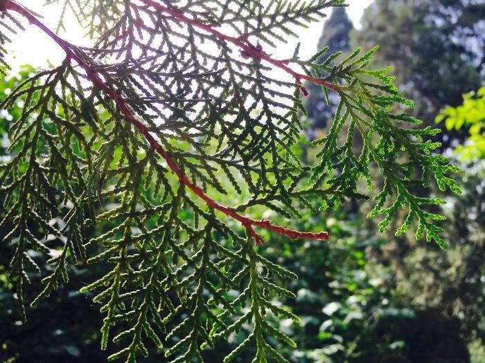 Taking Photos Tree Grean Hello World