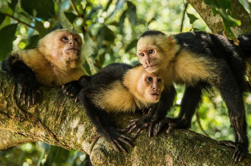 Monkeys on tree in forest