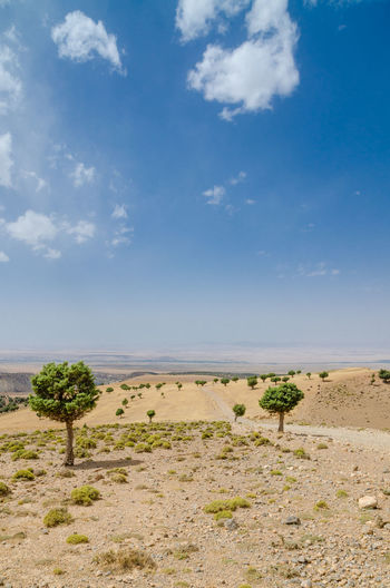 Arid Climate Beauty In Nature Cloud - Sky Day Desert Grass Horizon Over Land Landscape Nature No People Outdoors Sand Scenics Sky Tranquil Scene Tranquility Travel Destinations Tree