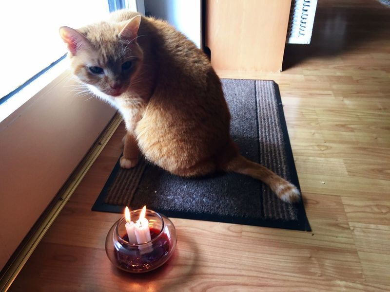 Smelling Candles Catch The Moment Cat Eyes Candlelight Catch Dreams Cat Dreams Pets 3XSPhotography