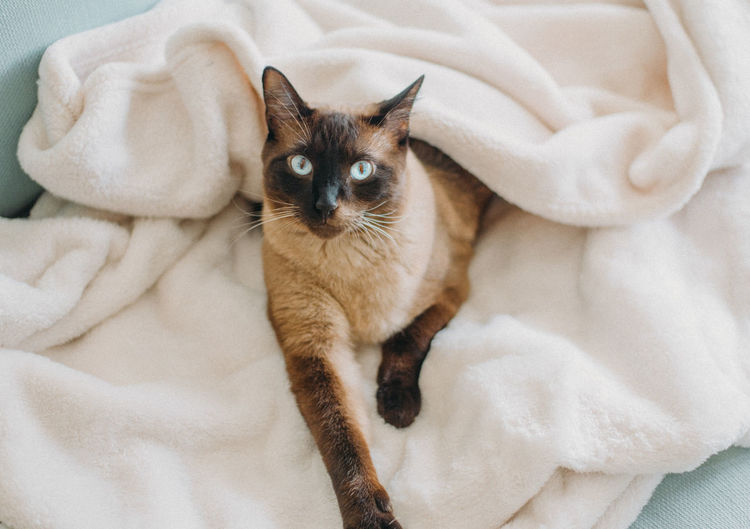 High angle view of cat relaxing on bed at home
