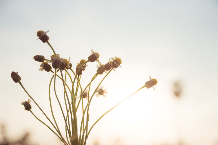 flower grass with sun light Grass Flower Flower Head Cereal Plant Summer Uncultivated Rural Scene Springtime Close-up Sky Plant Plant Life Flowering Plant Botany