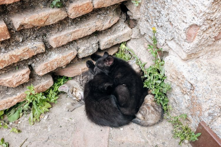 Animal Animal Themes Black Color Day Domestic Domestic Animals High Angle View Mammal Nature No People One Animal Outdoors Pets Relaxation Rock Solid Stone Wall Vertebrate Wall Wall - Building Feature Young Animal