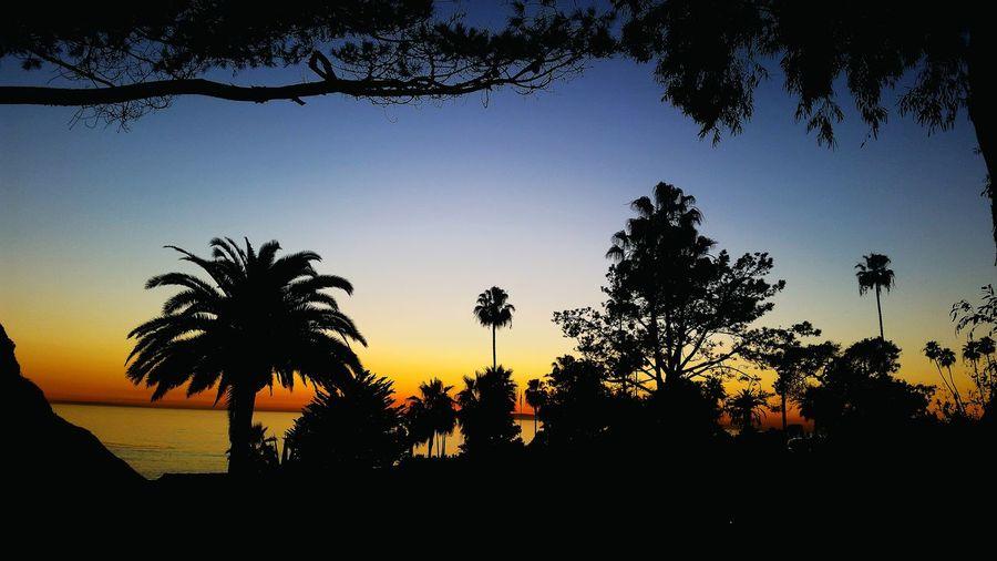 Painted Sky Sunset_collection Silouette & Sky Sunsetporn Amazing Colors Being A Beach Bum Crescent Beach Laguna Sunset Silouhette